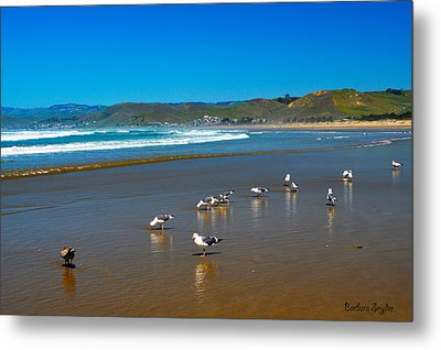 Birds On The Beach Morro Bay California Metal Print by Barbara Snyder
