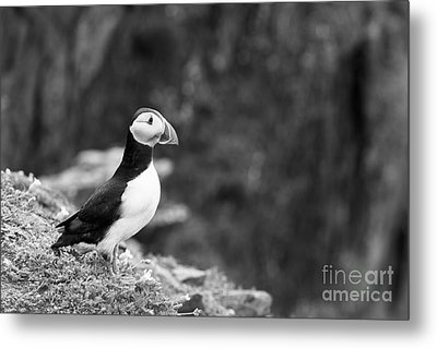 Black And White Black And White Bird Metal Print by Anne Gilbert