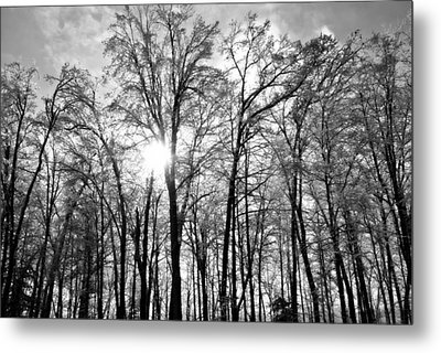Black And White Forest Metal Print by Dawdy Imagery
