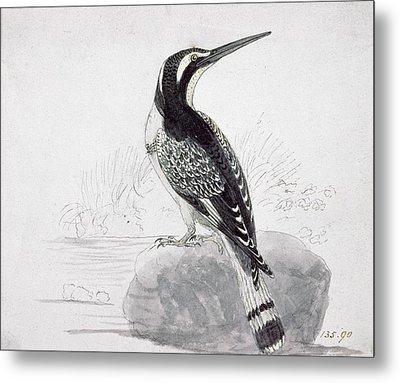 Black And White Kingfisher Metal Print by Thomas Bewick