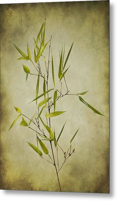 Black Bamboo Stem. Metal Print by Clare Bambers