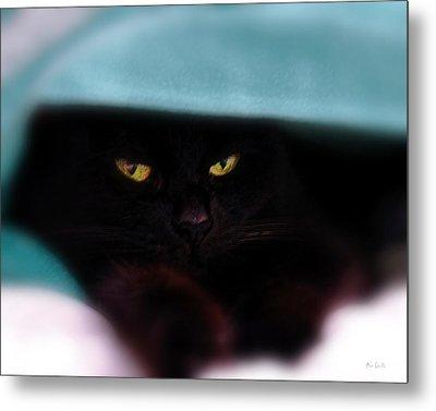 Black Cat Secrets Metal Print by Bob Orsillo