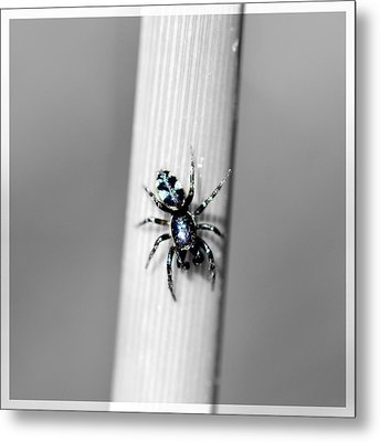 Black Spider In Black And White Metal Print by Toppart Sweden