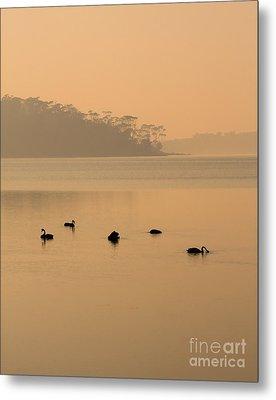 Black Swan Sunrise Metal Print by Mike  Dawson
