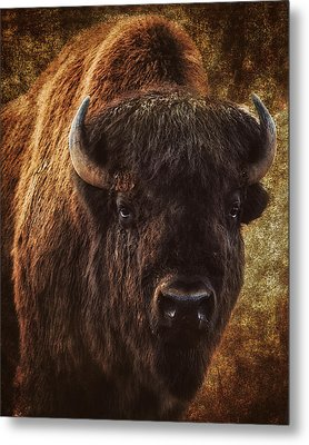 Bless The Beast Metal Print by Ron  McGinnis