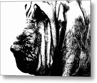 Bloodhound - It's Black And White - By Sharon Cummings Metal Print by Sharon Cummings