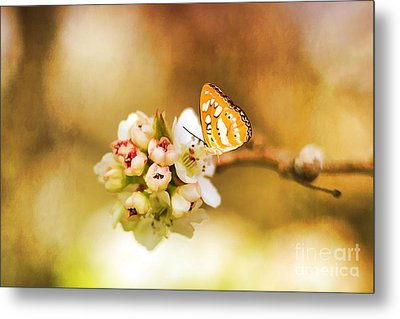 Blooms And Butterflies Metal Print by Darren Fisher