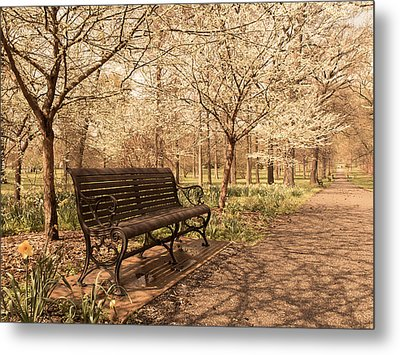 Blossoms  Metal Print by Scott Rackers