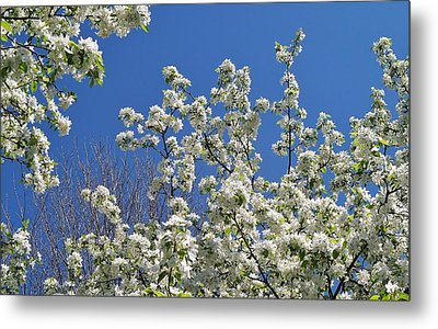 Blue And White Metal Print by Steven Stutz