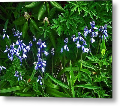 Blue Bells Metal Print by Aimee L Maher Photography and Art Visit ALMGallerydotcom