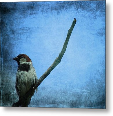 Sparrow On Blue Metal Print by Dan Sproul