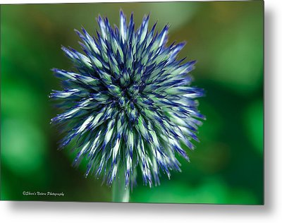 Blue Burst Metal Print by Sheen Watkins