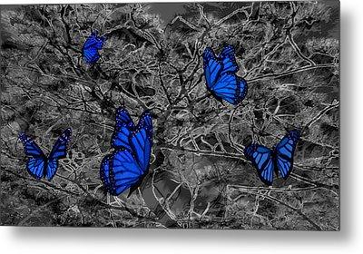 Blue Butterflies 2 Metal Print by Barbara St Jean