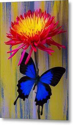 Blue Butterfly On Fire Mum Metal Print by Garry Gay