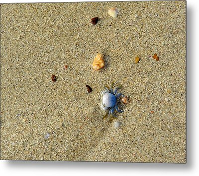 Blue Crab Metal Print by Leana De Villiers