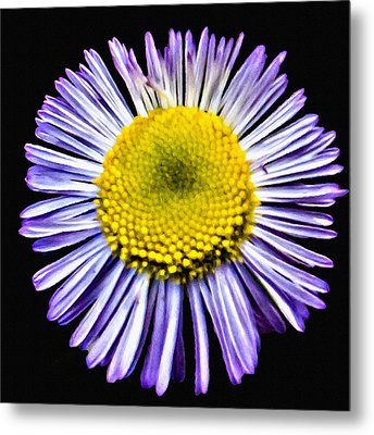 Blue Daisy Painting Metal Print by Bob and Nadine Johnston