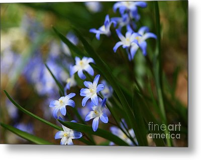 Blue For You Metal Print by Neal  Eslinger