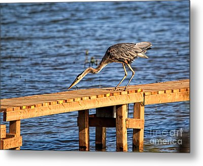 Blue Heron Dragonfly Lunch Metal Print by Cathy  Beharriell