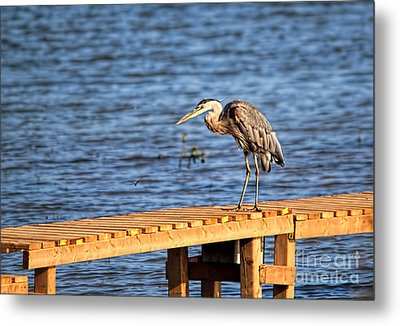 Blue Heron Spies The Dragonfly Metal Print by Cathy  Beharriell