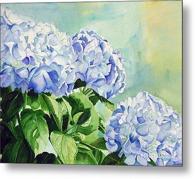 Blue Hydrangeas Metal Print by Elizabeth  McRorie