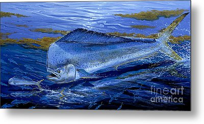 Blue Mahi Off0071 Metal Print by Carey Chen