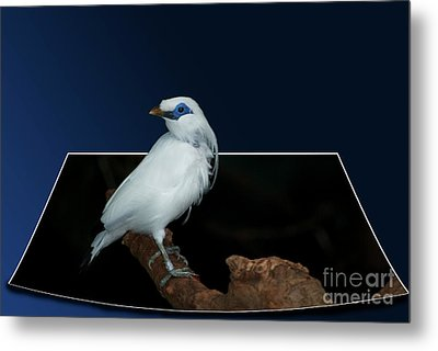Blue Mask Bandit Bird Metal Print by Thomas Woolworth