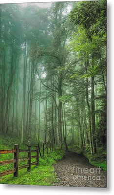 Blue Ridge - Trees In Fog Country Road II Metal Print by Dan Carmichael