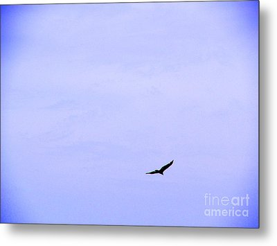 Blue Solo Flight Metal Print by Tina M Wenger