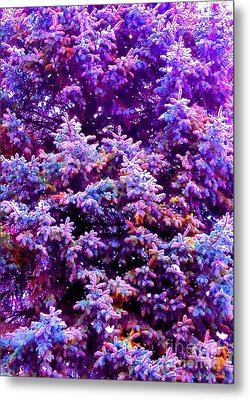 Blue Spruce In The Snow Metal Print by Ann Johndro-Collins