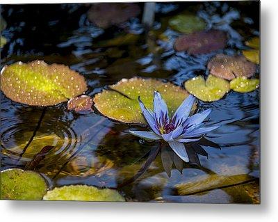 Blue Water Lily Pond Metal Print by Brian Harig