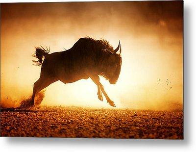 Blue Wildebeest Running In Dust Metal Print by Johan Swanepoel