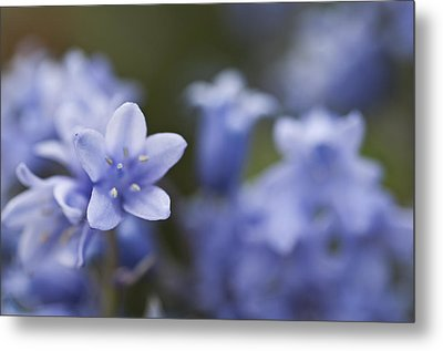 Bluebells 3 Metal Print by Steve Purnell