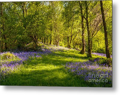 Bluebells Metal Print by Amanda And Christopher Elwell