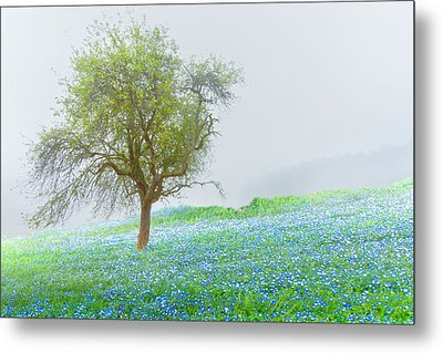 Bluebells Metal Print by Debra and Dave Vanderlaan