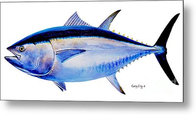 Bluefin Tuna Metal Print by Carey Chen