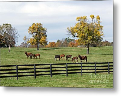 Bluegrass Autumn Metal Print by Roger Potts