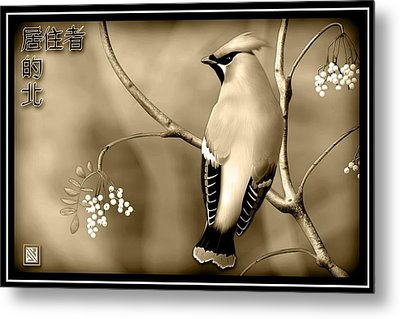 Bohemian Waxwing In Sepia Metal Print by John Wills