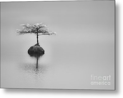 Bonsai At Fairy Lake Metal Print by Carrie Cole