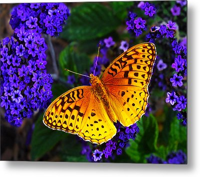 Boothbay Butterfly Metal Print by Bill Caldwell -        ABeautifulSky Photography