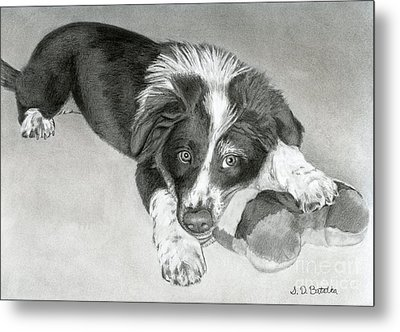 Border Collie Puppy Metal Print by Sarah Batalka