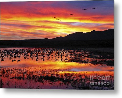 Bosque Sunset II Metal Print by Steven Ralser