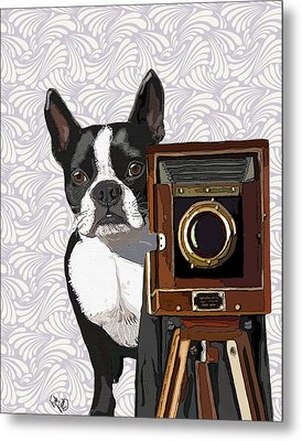 Boston Terrier Photographer Look Doggie Metal Print by Kelly McLaughlan