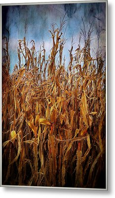 Bountiful Harvest Metal Print by Julie Dant