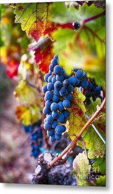 Bounty Of Napa Valley I Metal Print by George Oze