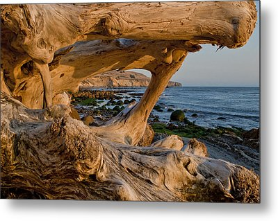 Bowling Ball Beach Framed In Driftwood Metal Print by Patricia Sanders