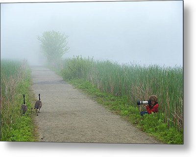 Boy Photographing A Pair Of Geese Metal Print by Tim Laman