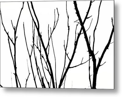 Branches Metal Print by Aidan Moran
