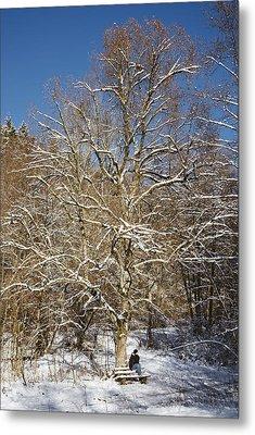 Break Under A Large Tree - Sunny Winter Day Metal Print by Matthias Hauser