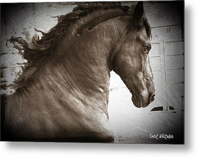 Breathless Metal Print by Royal Grove Fine Art