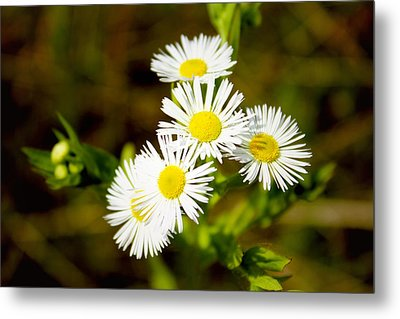 Bright And Merry Metal Print by Sheryl Burns